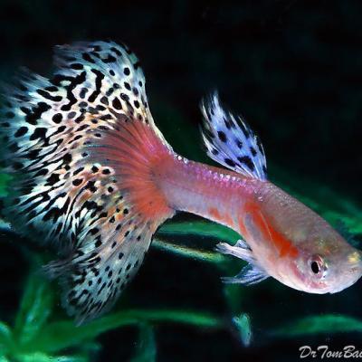 کانال تخصصی ماهیان زینتی